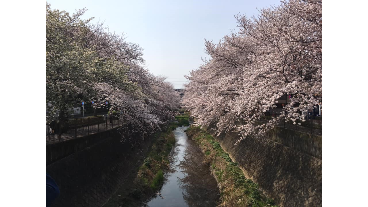 春は、花見大会